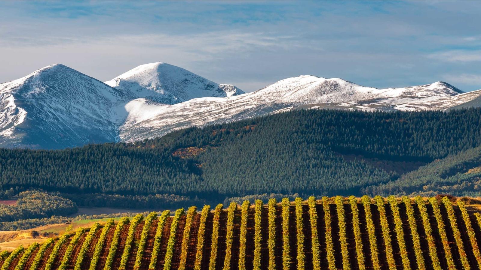 Nya och gamla viner från Navajas